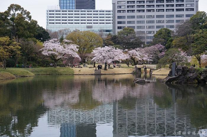 【東京賞櫻行程】小石川後樂園,東京櫻花開花時間較早的地點