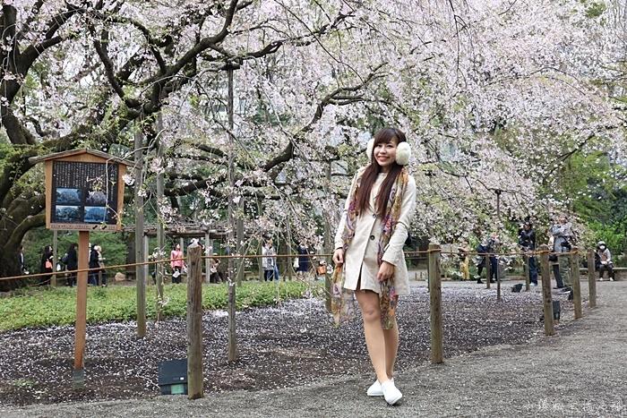 【東京賞櫻地點推薦】六義園,大枝垂櫻聞名,夜櫻也很美