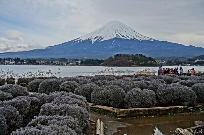 【河口湖景點推薦】河口湖自然生活館,看富士山絕景最佳角度