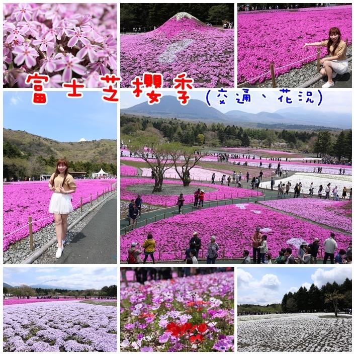 【日本富士芝櫻祭】行程交通/花期花況/門票票價全攻略,超夢幻粉紅色芝櫻花毯搭配富士山(9)
