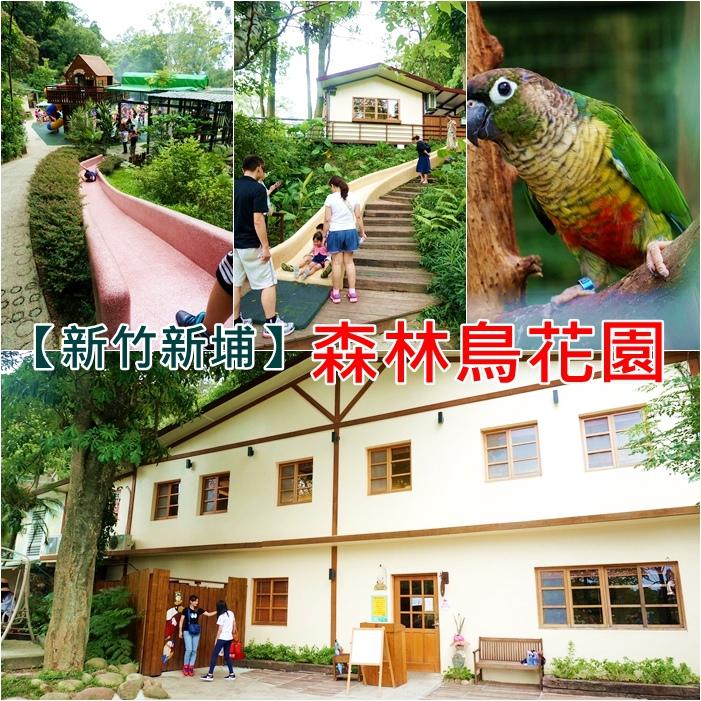 【新竹旅遊景點】森林鳥花園,小朋友們的森林快樂天堂,適合親子一日遊!