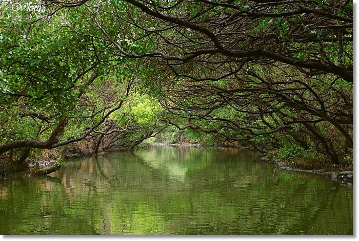 [台南景點推薦] 四草綠色隧道*台版亞馬遜河,迷死人的綠色隧道 @小環妞 幸福足跡