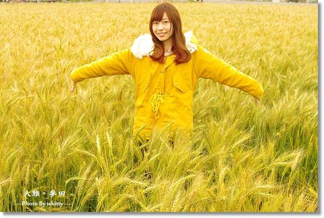 大雅麥田(3/22麥況) ♥ 金黃色的感動,熟悉的麥香,最對味! @小環妞 幸福足跡