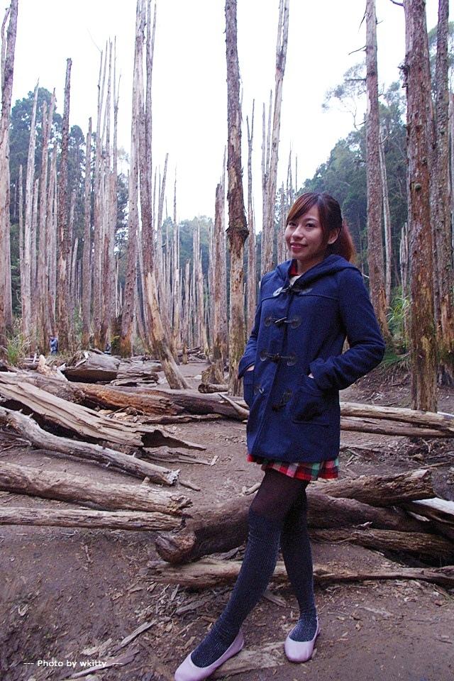 忘憂森林 ♥  南投˙枯木森林,天上人間