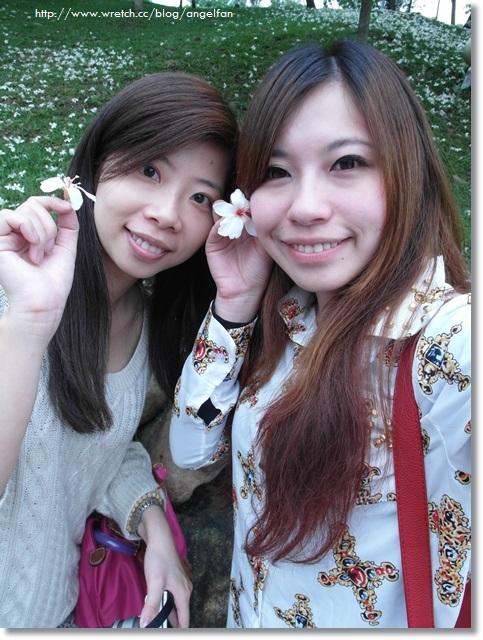 [苗栗賞桐花]˙四月雪紛飛,鋪上一層白色的地毯 ♥ 客家大院桐花公園 (4/13花況)