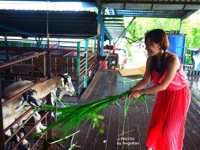 [玩♡宜蘭]餵食動物們好好玩~童心大起^^。宜農牧羊場 @小環妞 幸福足跡