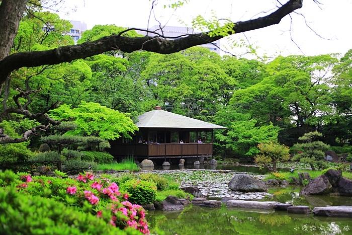 【大阪周遊券免費景點】慶澤園,城市中的綠意日式庭園,很美!