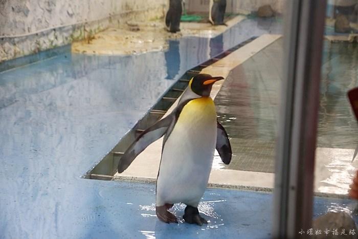 【大阪周遊卡免費景點】天王寺動物園,親子自由行推薦必來玩! @小環妞 幸福足跡