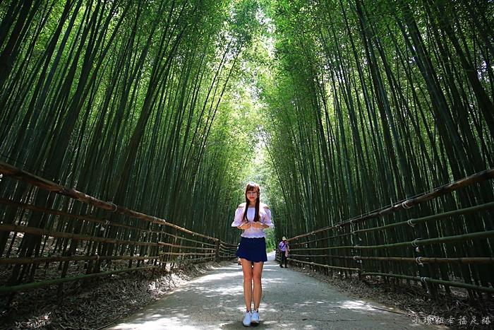【苗栗泰安竹林秘境】烏嘎彥竹林隧道,台版嵐山,超熱門打卡景點