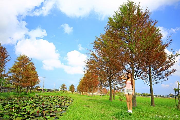 【游家農場】最新夏日版落羽松!宜蘭市中興路超美落羽松秘境 @小環妞 幸福足跡