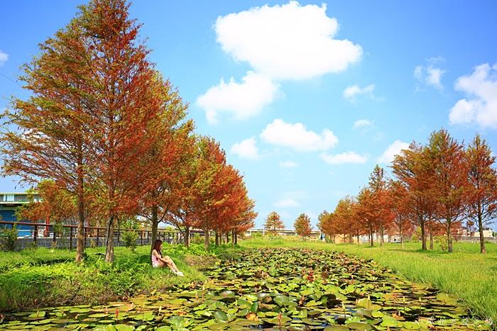 【游家農場】最新夏日版落羽松!宜蘭市中興路超美落羽松秘境