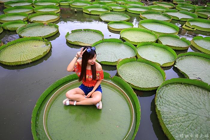 【康莊蓮園】桃園大王蓮景點,變身拇指姑娘在大王蓮花池上漂流 @小環妞 幸福足跡