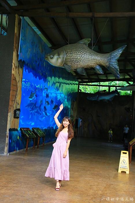 【新加坡河川生態園】River Safari門票+攻略,亞馬遜河遊船必搭 @小環妞 幸福足跡