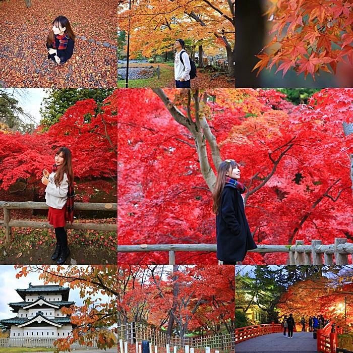 【弘前公園賞楓】弘前城,絕美的紅葉,紅到好不真實的楓葉.夜楓!