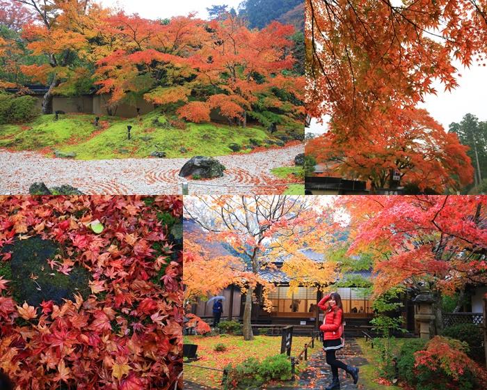 【松島円通院紅葉】日本宮城賞楓景點,搭上楓葉見傾期的小幸運