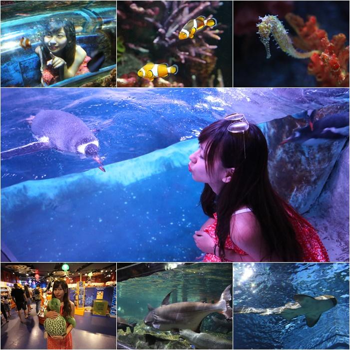 【曼谷海洋世界】暹羅海洋世界,超好玩景點!東南亞最大的水族館