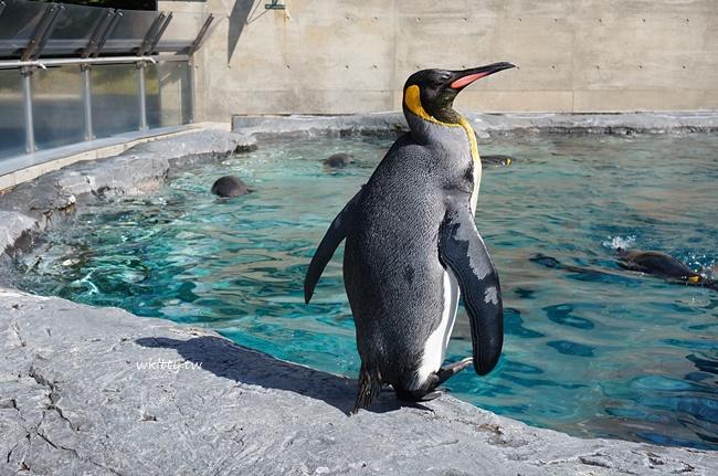 【北海道旭山動物園】超可愛!北極熊,企鵝,海豹,極地動物都在這 @小環妞 幸福足跡
