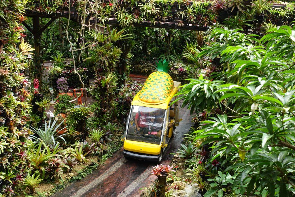 【名護鳳梨園】沖繩雨天備案,沖繩自由行下雨也可逛的鳳梨園景點
