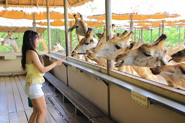 曼谷賽福瑞-Safari World野生動物園-門票-行程-表演-午餐-交通 @小環妞 幸福足跡