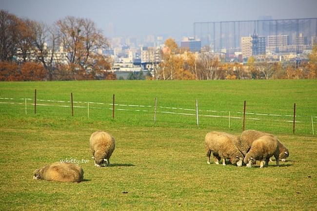 羊之丘展望台-札幌自由行景點推薦-交通-門票-遊記分享 @小環妞 幸福足跡