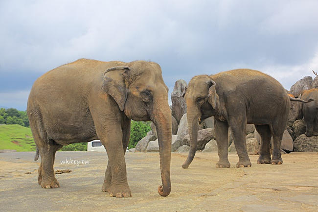 【九州自然動物園】先開車遊園,再搭Jungle bus餵獅子,好玩又刺激 @小環妞 幸福足跡