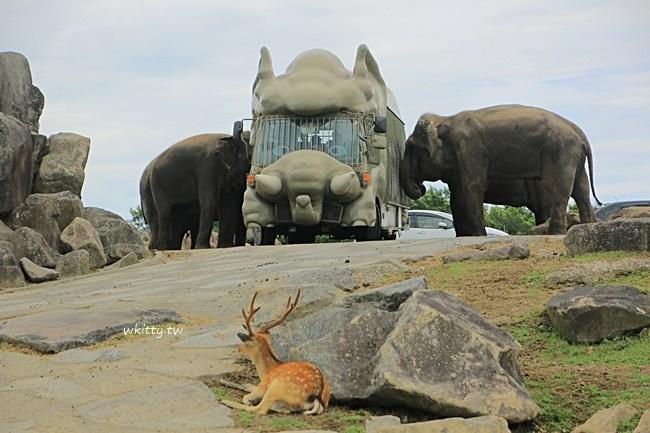 九州野生動物園African Safari-叢林巴士餵獅子超好玩-大分別府必去 @小環妞 幸福足跡