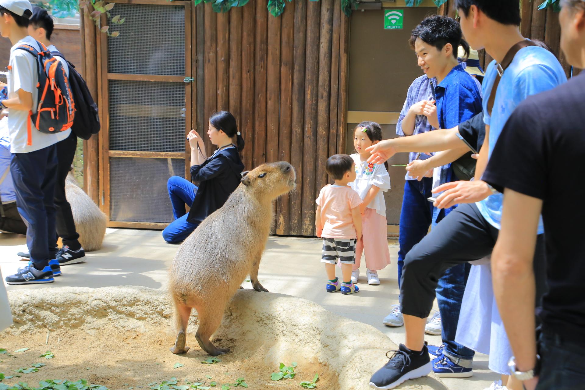 【神戶動物王國】親子一日遊必去景點,水豚君超萌的~抱一隻回家 @小環妞 幸福足跡