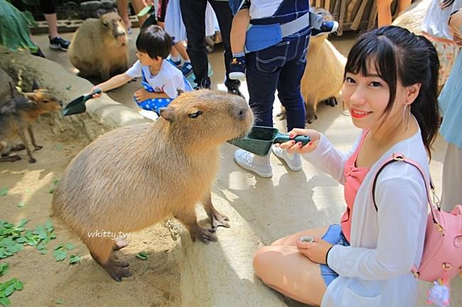 日本水豚君-神戶動王國-一日遊-門票-時間-日本動物園推薦 @小環妞 幸福足跡