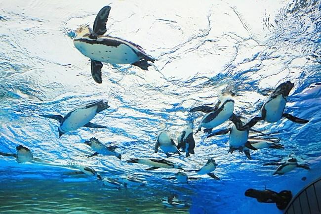 東京水族館-池袋水族館-sunshine陽光水族館-企鵝飛天表演 @小環妞 幸福足跡