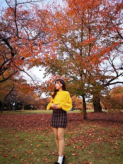 【新宿御苑楓葉】銀杏梧桐並木道,比臉還要大的落葉,紅葉地毯超美~ @小環妞 幸福足跡
