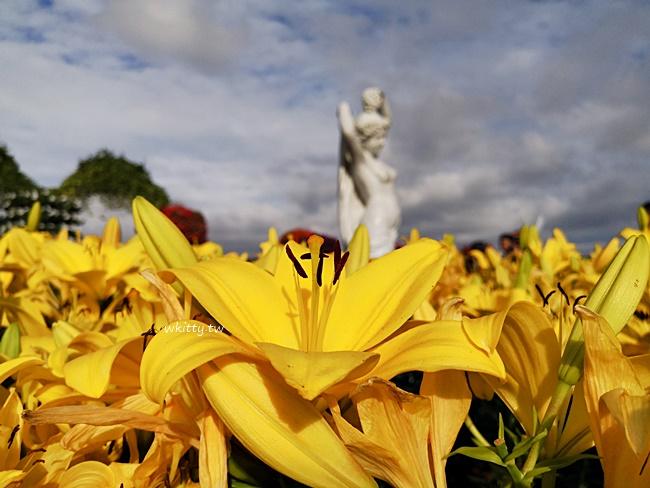 【中社觀光花市】台中賞花景點,鬱金香花季,彩色花毯好像到國外! @小環妞 幸福足跡
