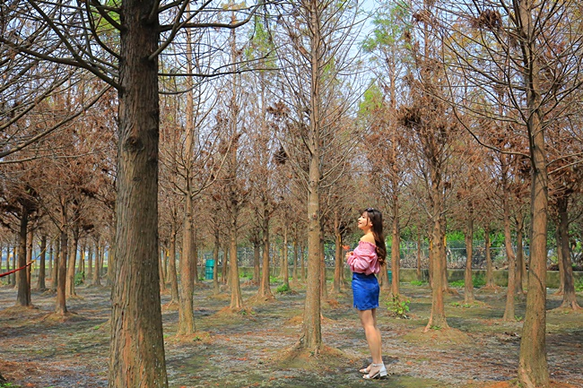 【台中中科落羽松】落羽松季節過了也超美,城市中的忘憂森林! @小環妞 幸福足跡