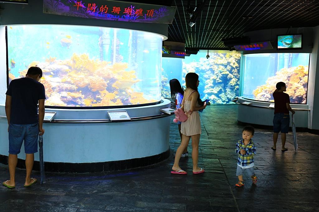 【屏東墾丁海生館】國立海洋生物博物館,親子同遊,墾丁雨備方案 @小環妞 幸福足跡