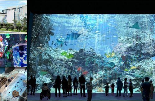 【桃園水族館】Xpark新開幕,門票預約流程,佔地4000多坪,2大特點7大亮點展區搶先看! @小環妞 幸福足跡