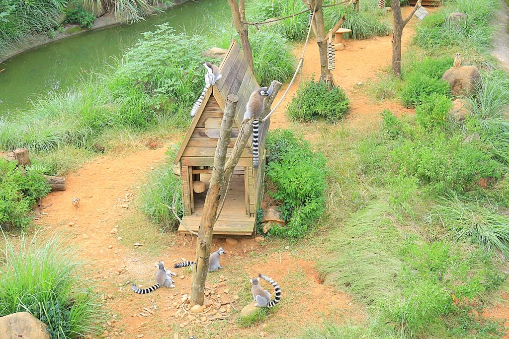 【六福莊生態度假旅館訂房攻略】長頸鹿就在房間的窗外,小朋友愛慘,來去動物園住一晚 @小環妞 幸福足跡